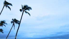 Swaying Palm Trees and a Beautiful Blue Sky stock image