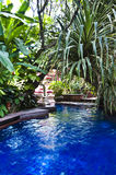 Tropical swimming pool. A tropical swimming pool asia Royalty Free Stock Images