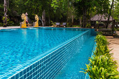 Tropical Swimming Pool in the jungle. Royalty Free Stock Photography