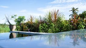 Tropical swimming pool at luxury hotel. water vibration on wind. Tropical swimming pool at luxury hotel area outdoor Foliage and water vibration on the wind stock video footage