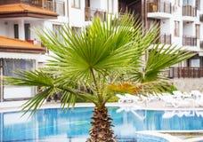 Tropical swimming pool. Stock Photo