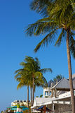 Tropical tall under the sun in Key West, Florida, USA. Stock Images