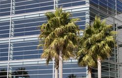 Tropical Tech 1. A new metal and glass biotech building in San Francisco's new Mission Bay development. Palm trees add a tropical look to the scene royalty free stock images