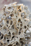 Tropical termite nest in the nature, termite mound in nature Stock Image