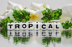Tropical text with green and yellow Royalty Free Stock Image