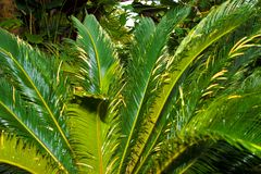 Tropical Texture Stock Photography