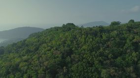 Tropical Thai jungles drone flight, wild mountains nature tree and palm. Tropical exotic green wild mountains jungles drone 4k flight on vacations stock footage