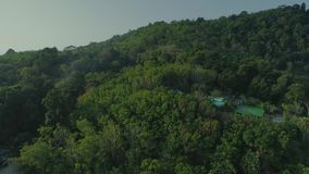 Tropical Thai jungles drone flight, wild nature tree and palm. Tropical exotic green wild jungles drone 4k flight on vacations stock footage