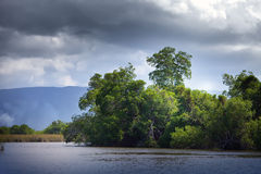 Tropical thickets mangrove forest on the Black river. Jamaica. Stock Images