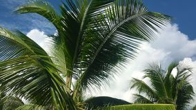 Tropical tourism inspiration background cloudy sky with moving high palmtree. Tropical tourism inspiration background. Cloudy sky with moving high palmtree stock video footage