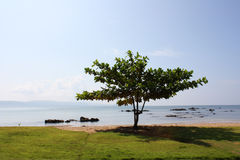 Tropical tree royalty free stock photo