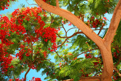 Tropical tree Royalty Free Stock Photos
