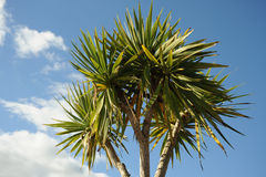 Tropical tree Stock Images