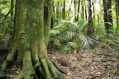 Tropical tree Stock Photo