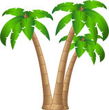 Tropical tree Royalty Free Stock Image