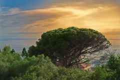 Tropical tree against cloudy sky at sunset. Madeira island. Tropical tree against cloudy sky at colorful sunset. Portuguese island of Madeira stock photo