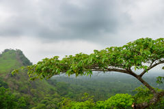 Tropical tree in the background Royalty Free Stock Image