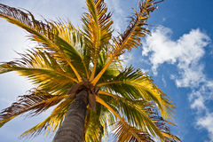 Tropical Tree Stock Photography