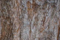 Tropical Tree Bark Close Up View Royalty Free Stock Photos