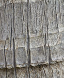Tropical tree bark closeup Stock Photos