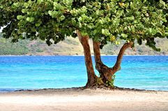 Tropical tree on a beach in St. Thomas. A tropical tree on a beach in St. Thomas, Virgin Islands with the blue ocean and an island in the background Royalty Free Stock Photography