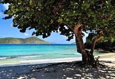 Tropical tree on a beach in St. Thomas Royalty Free Stock Images