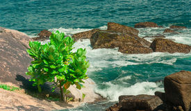 Tropical tree on the beach . Stock Image