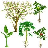 Tropical Tree Biology Lesson Digital Illustration. For any purpose such as book cover and illustration, education picture purpose such as website and blog, home stock illustration