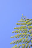 Tropical tree fern Stock Photo