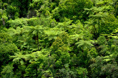 Tropical Tree Ferns stock image