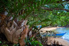 Tropical tree green and dry leaves, seaside landscape background. Rustic fisherman village view through jungle bush. Tropical island seashore with forest and stock photo