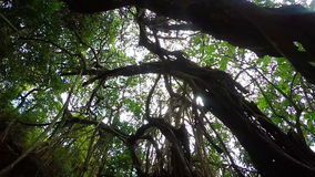 Tropical tree in India stock footage