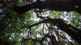 Tropical tree in India stock video footage