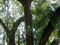 Tropical tree in the jungle. Philippines stock footage