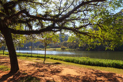 Tropical tree lake Ibirapuera Park, Sao Paulo, Brazil Stock Photography