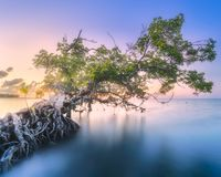 Tree over the water and coast of Borneo beach. Tropical tree over the water and sand coast of Borneo beach at sunset Stock Image
