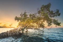 Tree over the water and coast of Borneo beach. Tropical tree over the water and sand coast of Borneo beach at sunset Stock Photos