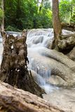 Tropical tree roots and water Royalty Free Stock Images