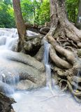 Tropical tree roots and waterfall Royalty Free Stock Images