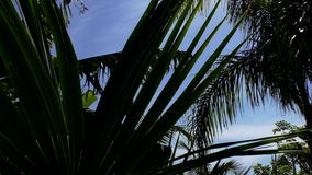 Tropical tree tops, sky and sunlight stock footage