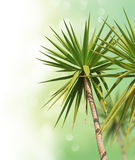 Tropical trees Stock Images