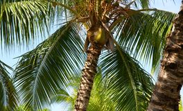Tropical trees Royalty Free Stock Images