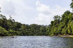Tropical trees along a river Stock Photo
