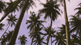Tropical trees in Asia stock image