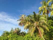 Tropical trees with blue sky Royalty Free Stock Photo