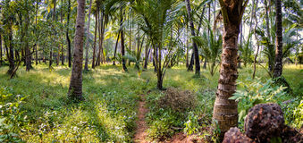 Tropical trees and bushes and a narrow path through it, India. Spacious wood from tropical trees and bushes and a narrow path through it, India Stock Photos
