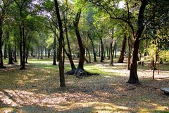 Tropical trees in Chapultepec Park. Tropical vegetation and trees in Chapultepec park in Mexico city,CDMX. Federal District. Ahuehuete Stock Photography