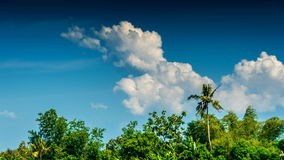 Tropical trees and clouds time lapse. Tropical green trees and clouds in blue sky time lapse stock footage