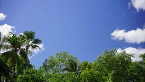 Tropical trees and clouds time lapse. A 20-second full HD time lapse of the blue skies and clouds with the tropical palm trees swaying with the wind stock video footage