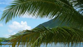 Tropical trees on the coast. Branch of a palm tree. PHANGAN, THAILAND. PHANGAN, THAILAND.Tropical trees on the coast. Branch of a palm tree stock footage
